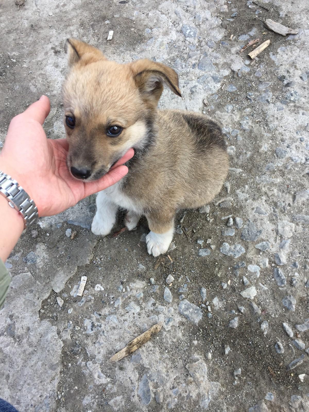 工地的小狗狗弗洛霞,现在应该长得很大了