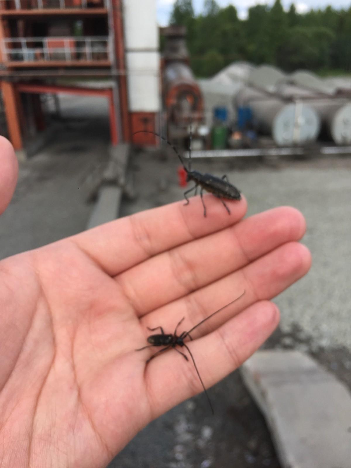 在工厂里面有许多奇奇怪怪的昆虫,俄罗斯夏天是动物们生命力最旺盛的时间