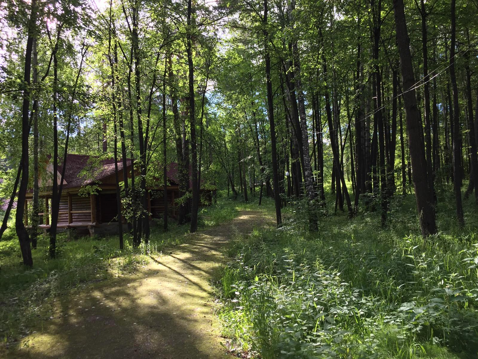 在小屋附近的林子里面散步