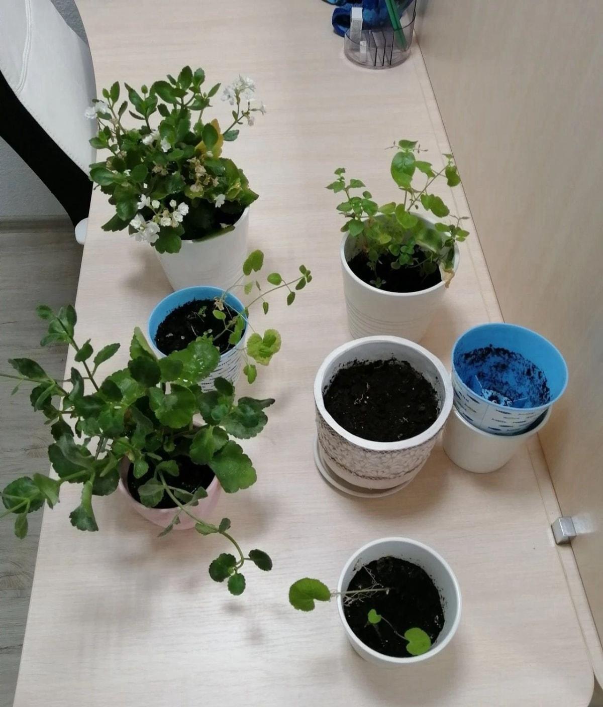 我们小狮座俄罗斯留学在叶卡捷琳堡的办公室的植物