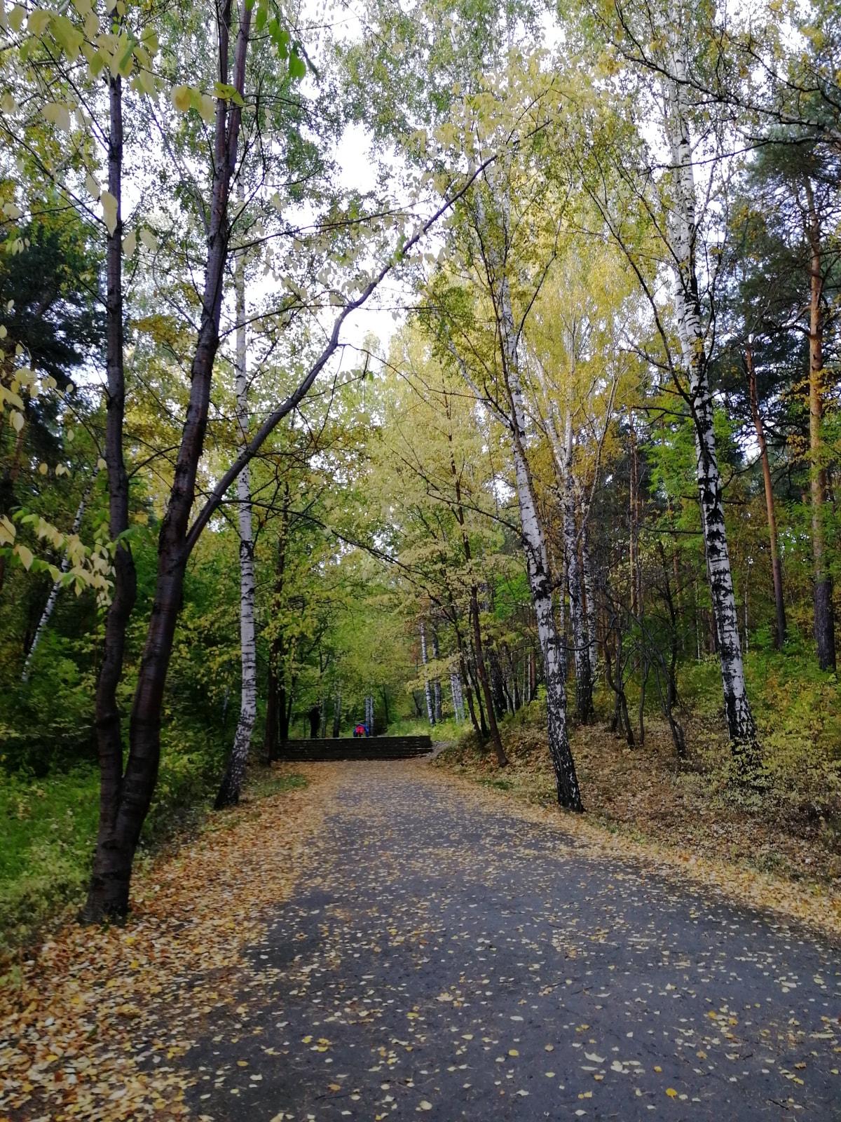 这是叶卡捷琳堡东边的沙尔塔什(Шарташ)湖边的树林