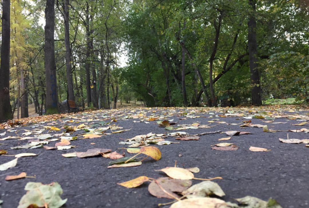 这是叶卡捷琳堡东边的沙尔塔什(Шарташ)湖边的树林的落叶
