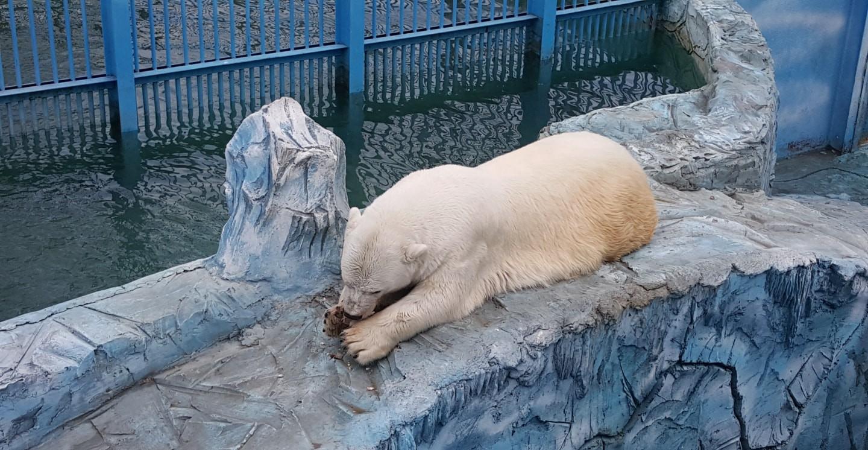 俄罗斯北极熊 俄罗斯留学生活 俄罗斯留学 俄罗斯生活